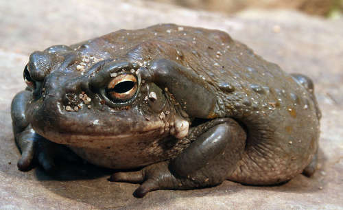 picture of a toad